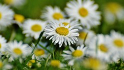 spring-meadow-1308509_640